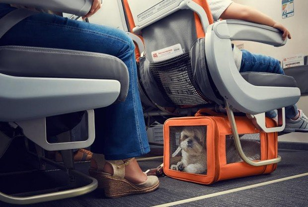 Animal deve permanecer dentro do kennel durante todo voo